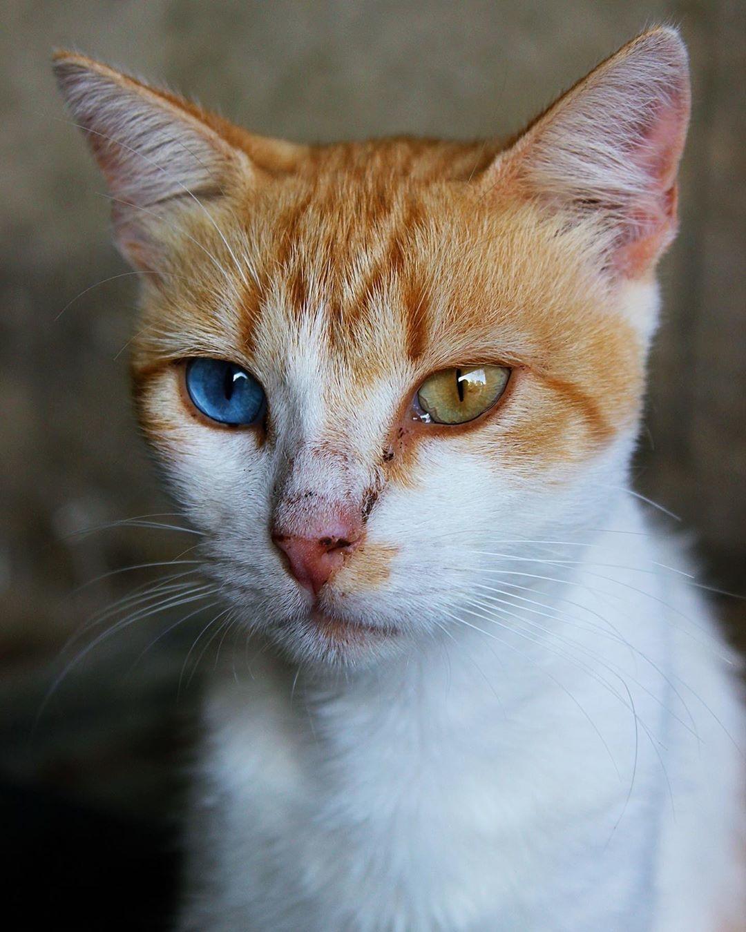 Natur Katze